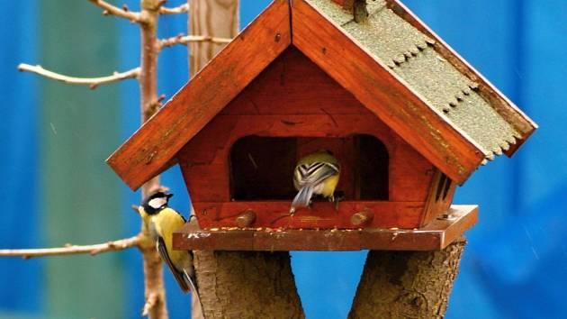 Slet ptačích strávníků u krmítka. Ilustrační foto