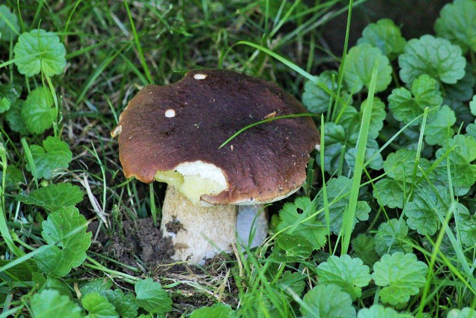 Letošní červencové nejen houbařské úlovky.