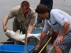 Záchranný odlov ryb z laguny