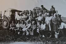 Družstevníci ve Víceměřicích při vybírání brambor. - 60. léta