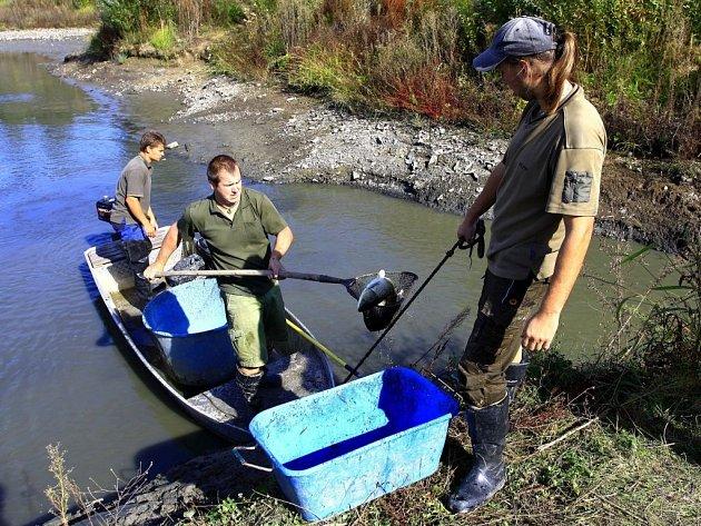 Odlov ryb vlaguně uValáška na Plumlovské přehradě