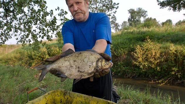 Úhyn ryb v potoce Haná. Rybář Hynek Dvořák