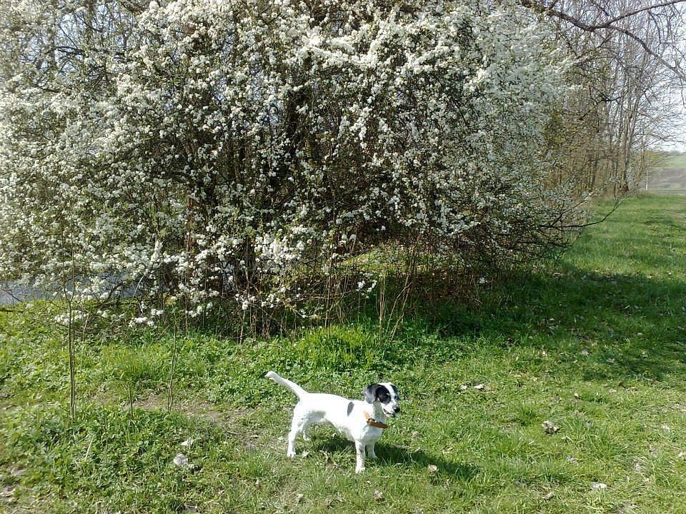 Jaro v Zábřehu na Moravě