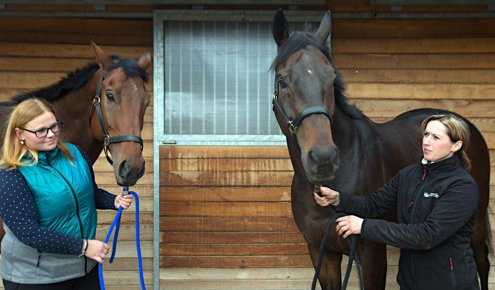 Koně trenéra Stanislava Popelky z Hvozdu u Prostějova se chystají na Velkou pardubickou. Vlevo Mahony, vpravo Stretton.