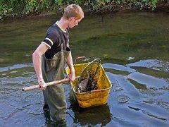 Úhyn ryb v potoce Haná