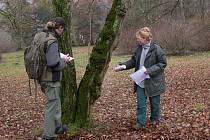 Zámecký park v Čechách pod Kosířem čekají už brzy výrazné změny. Budou se zde kácet stromy a provádět nová výsadba