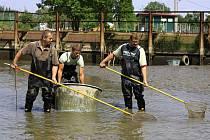 Odlov ryb v tůních pod hrází přehrady