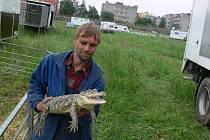 Cirkusový krokodýl