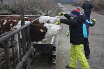 Davy lidí putovaly v neděli na Zlatou farmu u Štětovic. Tentokrát návštěvníci mířili nejen za zvířaty ale také na vánoční program.