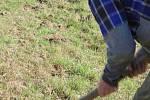 Na Běleckém Mlýně vysadili 2 500 korkovníku amurských