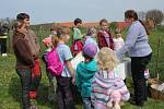 Rodiny s dětmi vyrazily na Bílou sobotu do Čelechovic na Hané. Na zdejších pastvinách se tradičně počítala kůzlátka. Na pastvu jich vyběhlo osmnáct. Chovatelka však kozám ještě průběžně pomáhá rodit.