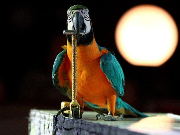 Cirkus Šimek láká na papoušky. Ilustrační foto