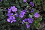Jaro v prostějovské botanické zahradě