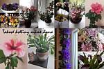 Takové květiny máme doma