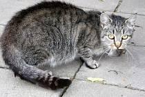 LOVCI FOTEK: Kočka a myš