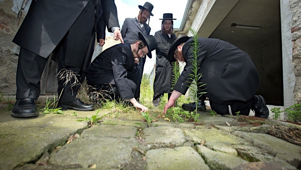 Kamenými náhrobky ze zničeného židovského hřbitova vydlážděný zapadlý dvorek v Drozdovicích.  Zbožní muži z USA, Británie, Izraele, Rakouska a České republiky hledají zbytky hebrejských nápisů.