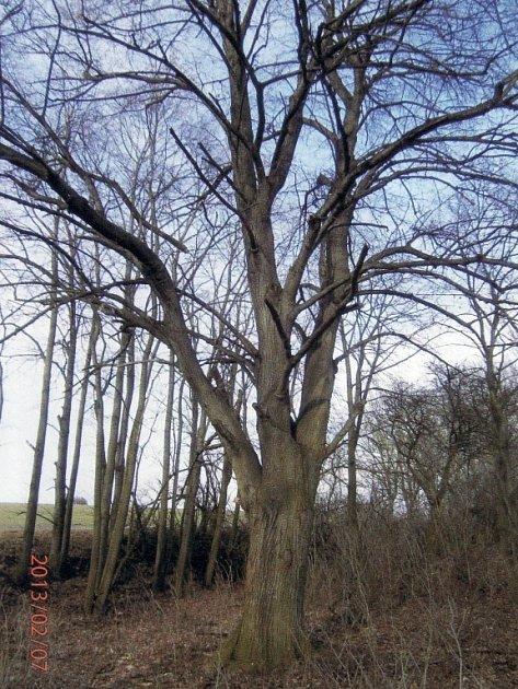 Uosmnáct metrů vysoké lípy obecné stávala socha blahoslaveného Jana Sarkandera zosmnáctého století. Nyní patří strom mezi památné.