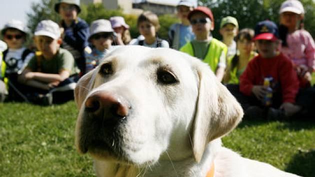 Psi mají přednost před dětmi.