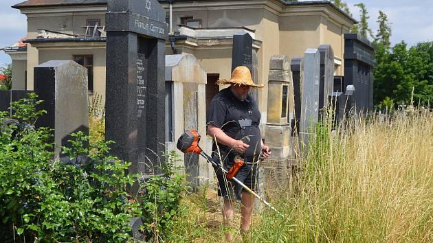 Práce na židovském hřbitově v Prostějově.