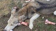 Psy v Ponikvi našli ve zbídačeném stavu