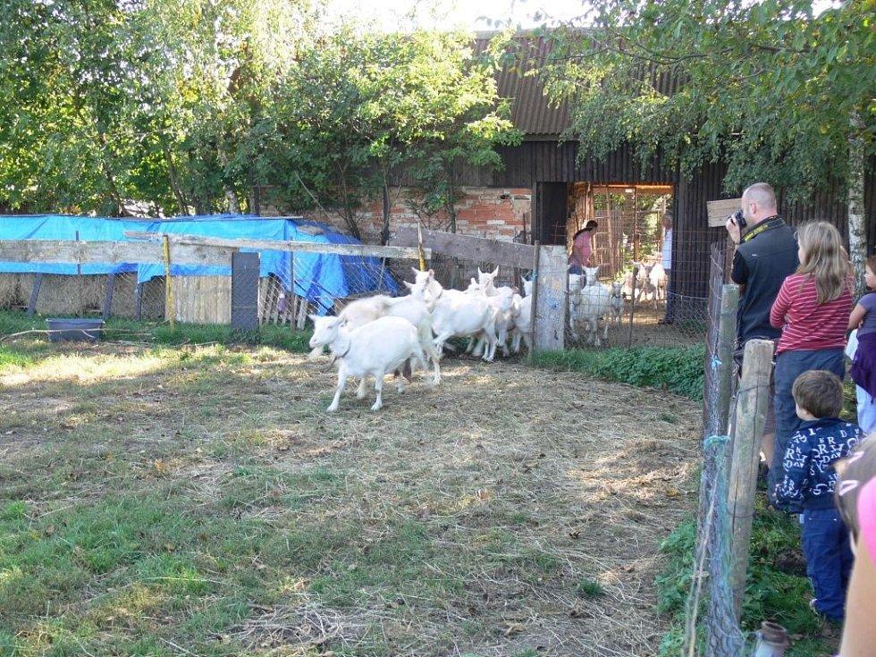 Slavnostní zakončení pastevní sezóny na kozí farmě Rozinka v Čelechovicích na Hané