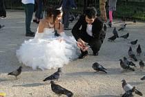 LOVCI FOTEK: Holubí svatba