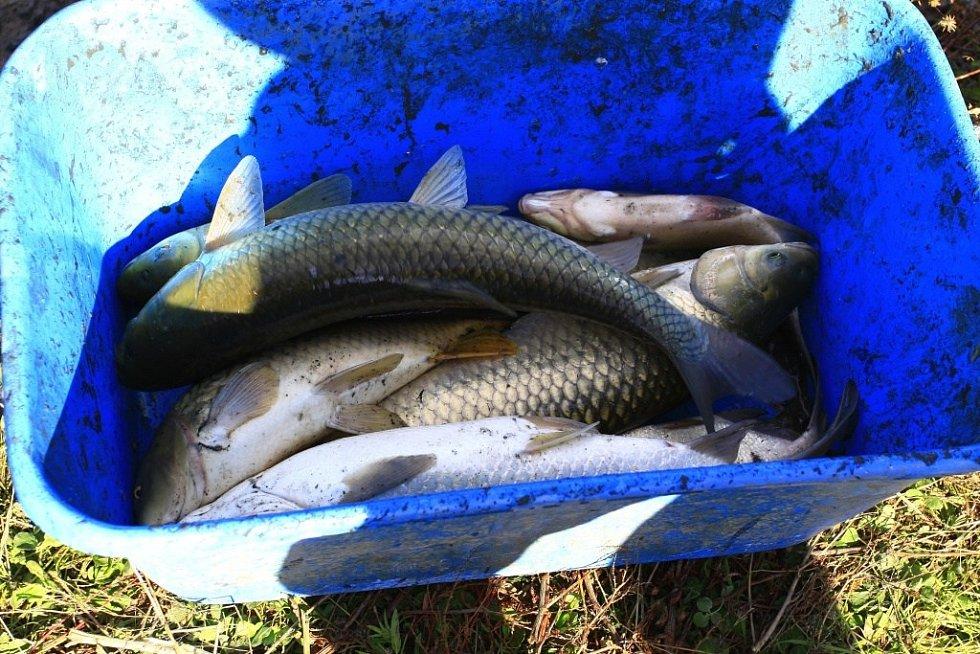 Odlov ryb v laguně u Valáška na Plumlovské přehradě