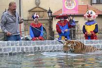 Tygřice Tajga při koupání v kašně na Pernštýnském náměstí v Prostějově
