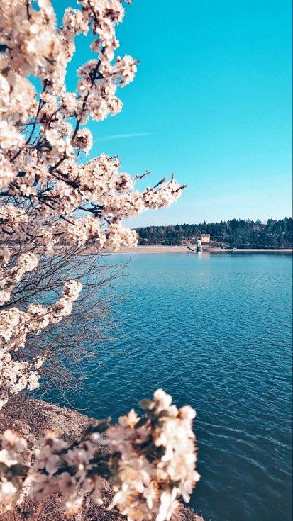 Jaro u plumlovské přehrady