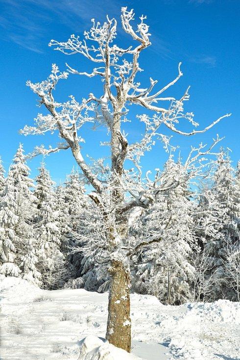 Ohlédnutí za letošní zimou v Jeseníkách