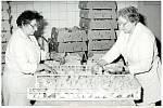 MEZI KUŘATY. Přemyslovice byly v minulosti centrem živočišné výroby na Prostějovsku. Zejména díky drůbežárně, která se nacházela v severozápadní části obce. Snímek pochází ze závodu z roku 1985.
