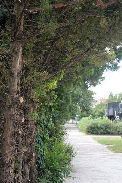 Zastřihnuté keře a zeleň, odklizené odpadky. Prostranství před prostějovským nádražím se dočkalo úprav.