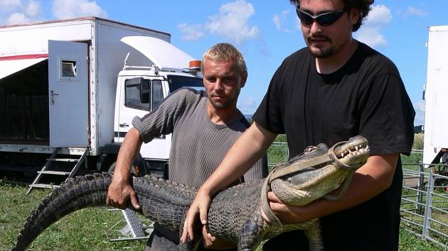 Berousek Originál Cirkus Sultán předvede i krokodýlí show