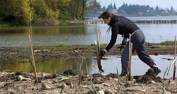 Výsadba mokřadních rostlin na plumlovské přehradě