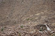 Těžba dřeva, sucho a řádění kůrovce v lesích na Prostějovsku, které spravují Vojenské lesy a statky ČR. (lokalita armádního újezdu Březina u Hamer)