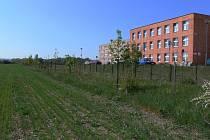 Pozemky za prostějovskou nemocnicí, které jsou určené pro výstavbu rodinných domů, bude radnice prodávat formou veřejné aukce.