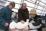 V areálu v Plumlovské ulici si dali dostaveníčko chovatelé králíků a holubů