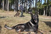 Okolí Šubířova bylo svědkem klání psích stopařů