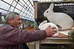 Moravský bílý hnědooký králík celosvětový unikát