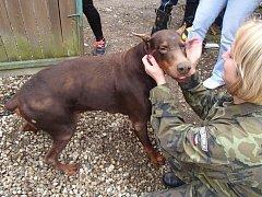 Záchrana s dobrým koncem. Hasiči z Prostějova pomohli psovi z jímky.