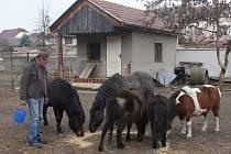 Z Domova pro opuštěná zvířata v Měrovicích nad Hanou