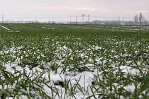 Současná sněhová pokrývka zajistí rostlinám jen málo vláhy.