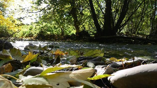 Hloučela pod Plumlovskou přehradou