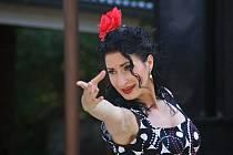 Flamenco. Ilustrační foto