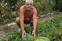 Antonín Jurčík se úspěšně věnuje pěstování vodních melounů.
