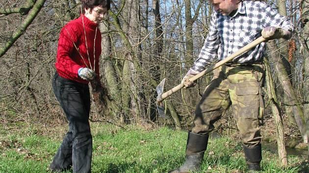 V prostějovském lesoparku Hloučela sázejí teď ochránci přírody stovky nových stromů a keřů.