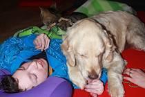 Psí a kočičí terapeuti ze sdružení Aura Canis pomáhají dětem i dospělým zvládat stres, uvolňovat napětí a rozdávají úsměv. Jitka Šiklingová se zvířecími miláčky těší hendikepované děti ze Střední školy, Základní školy a Dětského domova Prostějov, Tetín 7