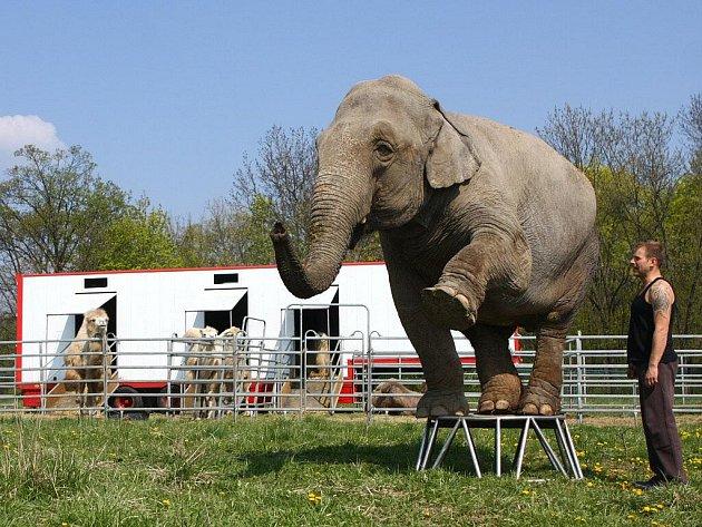 Cirkus Berousek na štaci v Prostějově