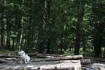 Pohádkový les ve Žraloku - 17. 8. 2019