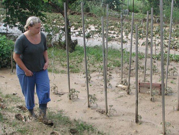Jestli úsilí držovických pěstitelů přijde vniveč, ukážou následující dny.